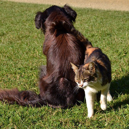 Dog and Cat Getting Along
