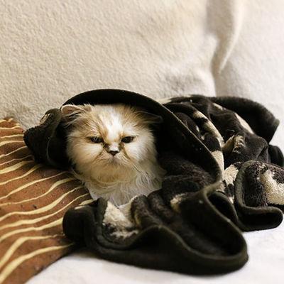Sick Kitty