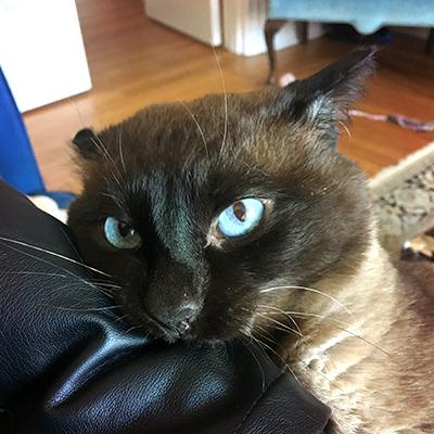 Cat biting leather jacket