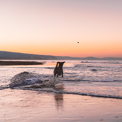 Dog standing in the surf